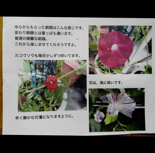 IMG_20180706_094323.jpg