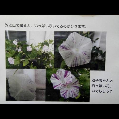 IMG_20180707_143150.jpg
