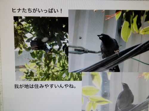 IMG_20180710_193600.jpg